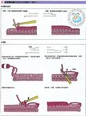 基本編-鉤針篇:在端邊3針已上的減針