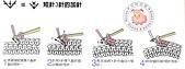 基本編-鉤針篇:短針3針加針