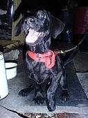 我家的狗:DSC02902