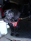 我家的狗:DSC02903