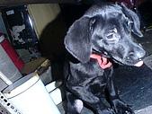 我家的狗:DSC02906