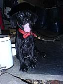 我家的狗:DSC02908