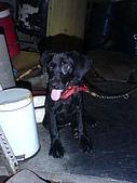 我家的狗:DSC02909