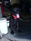我家的狗:DSC02910