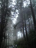 溪頭‧杉林溪:DSC00601_縮小大小.JPG