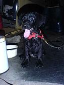 我家的狗:DSC02912