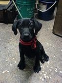 我家的狗:DSC02924
