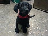我家的狗:DSC02926