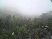 溪頭‧杉林溪:DSC00594_縮小大小.JPG