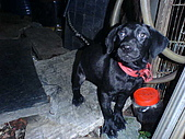 我家的狗:DSC02878