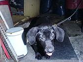 我家的狗:DSC02879