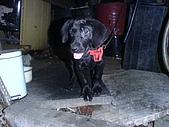 我家的狗:DSC02880