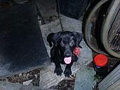 我家的狗:DSC02882