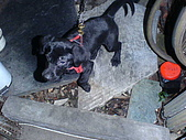 我家的狗:DSC02894