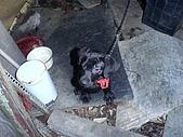 我家的狗:DSC02897