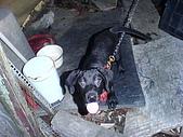 我家的狗:DSC02898