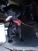 我家的狗:DSC02901