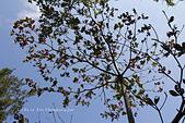 【台東】琵琶湖‧森林公園:_MG_4668.JPG