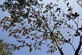 【台東】琵琶湖‧森林公園:_MG_4672.JPG
