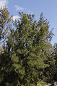 【台東】琵琶湖‧森林公園:_MG_4676.JPG