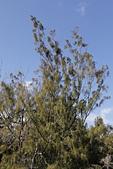 【台東】琵琶湖‧森林公園:_MG_4677.JPG