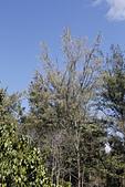 【台東】琵琶湖‧森林公園:_MG_4678.JPG