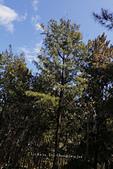 【台東】琵琶湖‧森林公園:_MG_4680.JPG