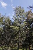 【台東】琵琶湖‧森林公園:_MG_4681.JPG