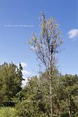 【台東】琵琶湖‧森林公園:_MG_4682.JPG