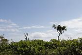 【台東】琵琶湖‧森林公園:_MG_4660.JPG