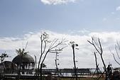 【台東】琵琶湖‧森林公園:_MG_4661.JPG
