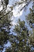 【台東】琵琶湖‧森林公園:_MG_4684.JPG
