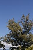 【台東】琵琶湖‧森林公園:_MG_4664.JPG