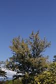 【台東】琵琶湖‧森林公園:_MG_4665.JPG