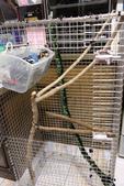 蜜袋鼯小悟:小悟新家-DIY白鐵籠-3