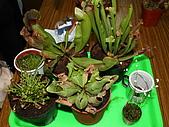 食蟲植物:IMG_0310.jpg