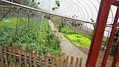 2010年11月 新竹 尖石 石磊 泰崗 :泰崗  自種有機蔬果