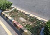 109年9月:【17119】仁愛路與文林六街分隔島上 植栽補值前.jpg