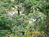 990331本鄉第一公墓墳墓沖毀請速妥善規劃排水設施-會勘:DSCI0129.JPG