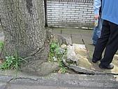 20110407林口區道路會勘西林里:IMG_0213 (Large).JPG