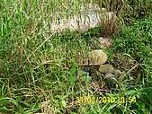990331本鄉第一公墓墳墓沖毀請速妥善規劃排水設施-會勘:DSCI0137.JPG