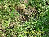 990331本鄉第一公墓墳墓沖毀請速妥善規劃排水設施-會勘:DSCI0139.JPG