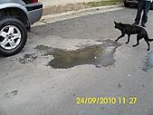 990924冠東方社區,週邊行道樹枯死,排水溝不通及柏油路面不平等問題,請速辦理改善:DSCI0828 (Large).JPG