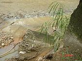 960609視察水患會勘照片:DSC03580.JPG