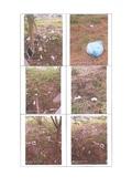 109年2月:1090115001世紀長虹-3.jpg