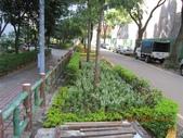 1000726麗園一街6巷花草種植:IMG_0578 (Large).JPG