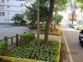 1000726麗園一街6巷花草種植:IMG_0579 (Large).JPG