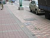 20110408林口區道路會勘東勢、麗園里:IMG_0404 (Large).JPG