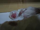 皮皮與小baby:IMG_0061.JPG
