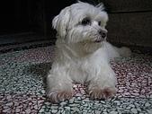 好多狗:IMG_0124.JPG